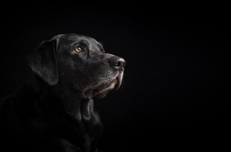 تعرف على قائمة أغلى أنواع الكلاب في العالم!