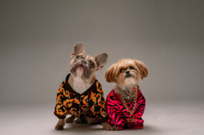 Luxury Dog Accessories for Your Beloved Pup
