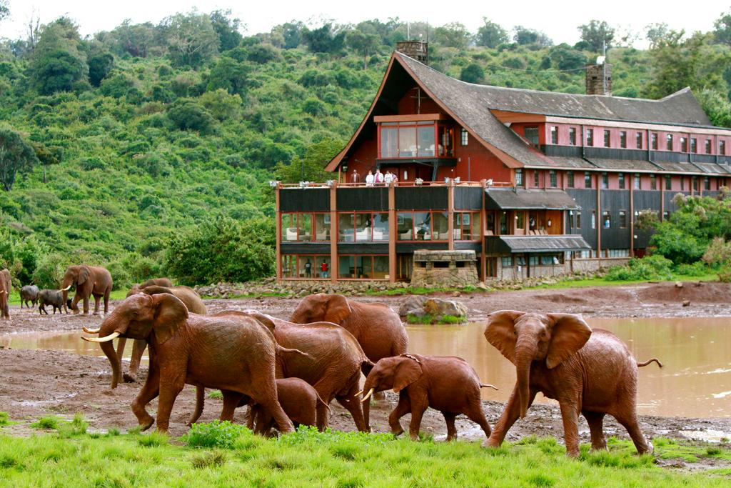 Most Unique Hotels - The Ark, Kenya